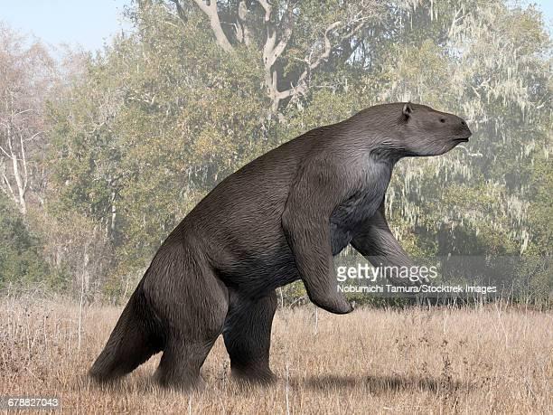 megatherium americanum from the pleistocene epoch of south america. - mammal stock illustrations, clip art, cartoons, & icons