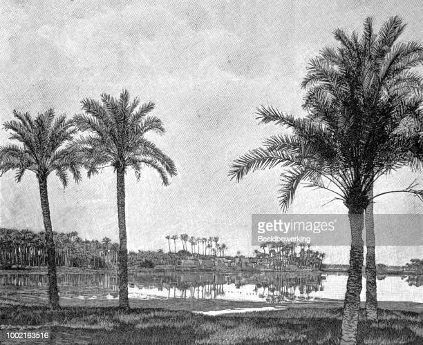 memphis egypt in 1895 - nile river stock illustrations, clip art, cartoons, & icons