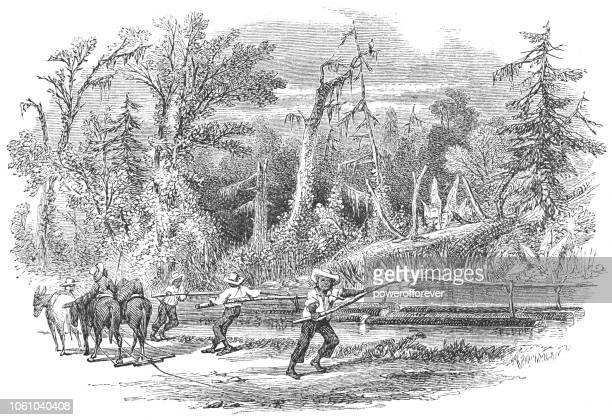Men Irrigating a Field using Water Diverted with Sluices in Virginia, USA (19th Century)