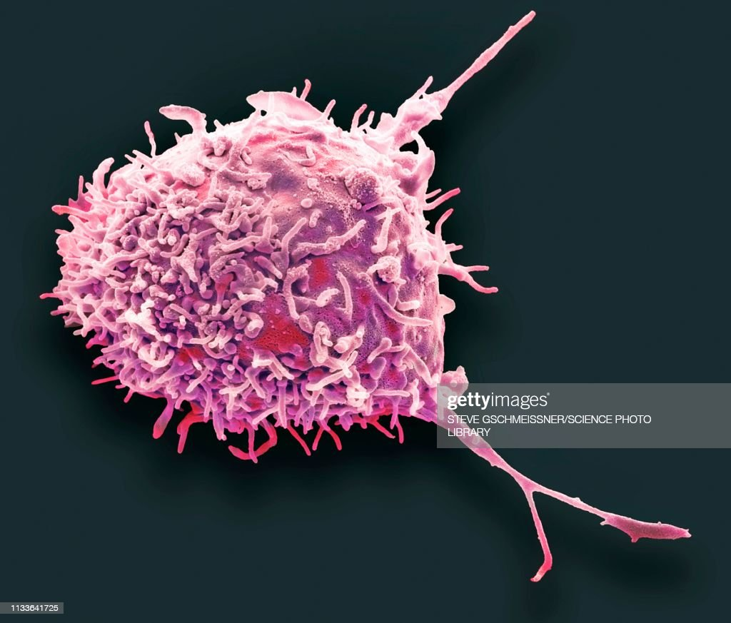 Mesenchymal stem cell, SEM : Stock Illustration