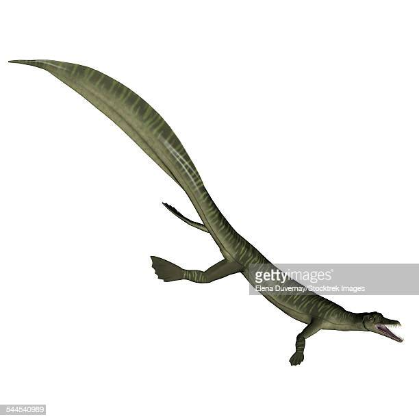 Mesosaurus dinosaur, white background.