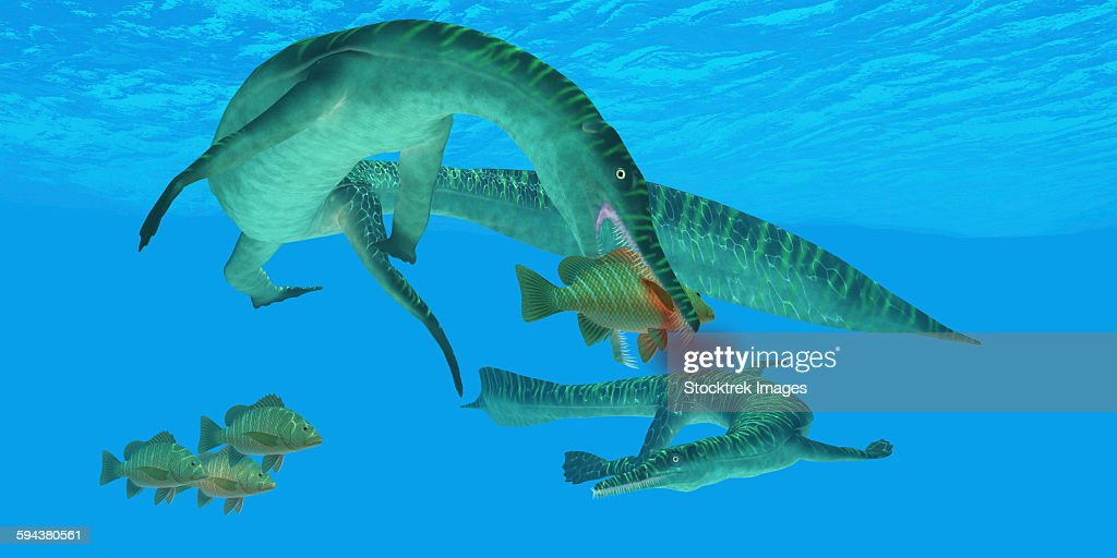 Mesosaurus marine reptile attacks a Mangrove red snapper fish in a Permian ocean. : stock illustration