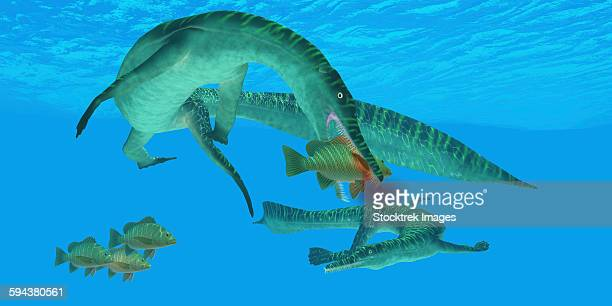 Mesosaurus marine reptile attacks a Mangrove red snapper fish in a Permian ocean.