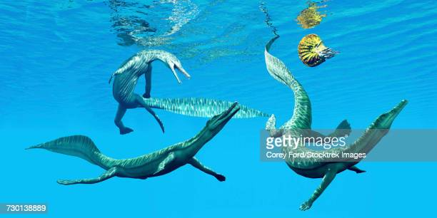 Mesosaurus reptiles chase after an ammonite.