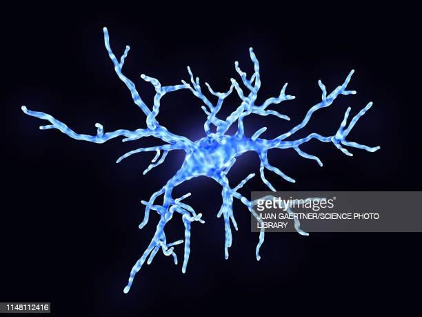 microglial cell, illustration - immune system stock illustrations