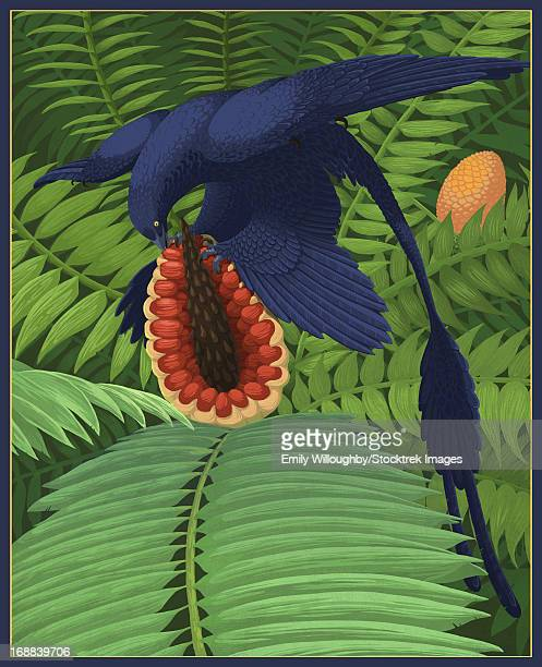 Microraptor gui exhibits speculative onmivory by snacking on a cycad fruit.