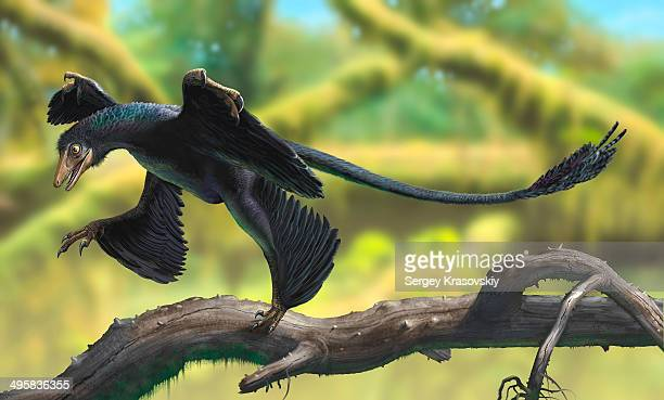 a microraptor perched on a tree branch. - dromaeosauridae stock illustrations
