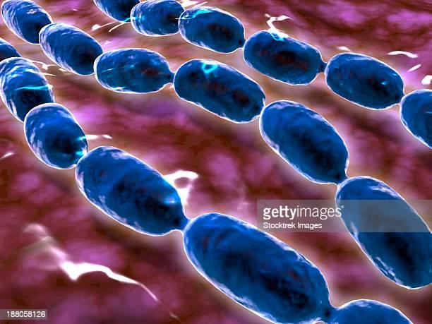 microscopic view of bacterial pneumonia. bacterial pneumonia is a type of pneumonia caused by bacterial infection. - streptococcus pneumoniae stock illustrations