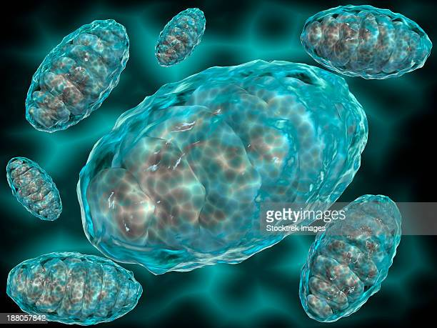 ilustraciones, imágenes clip art, dibujos animados e iconos de stock de microscopic view of mitochondria. mitochondria are the cell's power producers. they convert energy into forms that are usable by the cell. - mitocondria