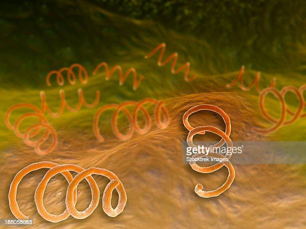 ilustraciones, imágenes clip art, dibujos animados e iconos de stock de microscopic view of syphillis. syphilis is a sexually transmitted infection caused by the spirochete bacterium, treponema pallidum. - sifilis