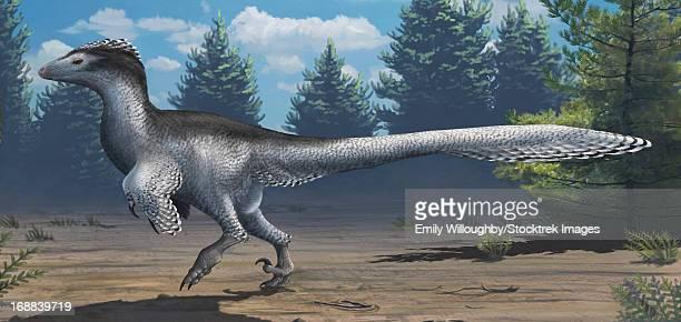 a mid-sized cretaceous china deinonychosaur. - dromaeosauridae stock illustrations