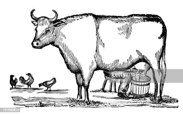 milking a cow - milking stock illustrations, clip art, cartoons, & icons