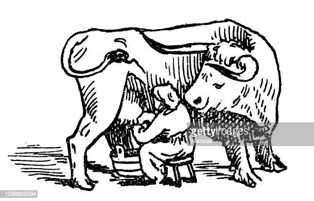 milkmaid milking a cow - milking stock illustrations, clip art, cartoons, & icons