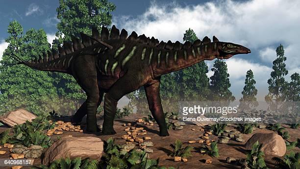 miragaia dinosaur walking near wollemi pines. - scute stock illustrations, clip art, cartoons, & icons
