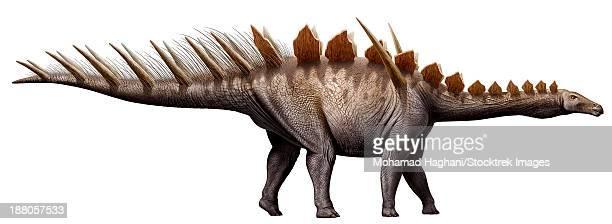 Miragaia longicollum, a stegosaurid of the Jurassic period.