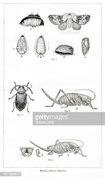 Varios insectos grabado 1892