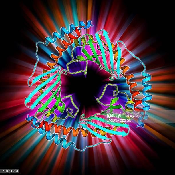 ilustraciones, imágenes clip art, dibujos animados e iconos de stock de p32 mitochondrial matrix protein - mitocondria