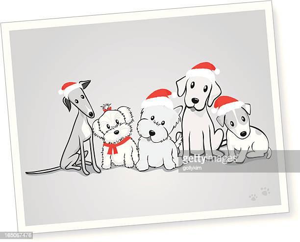 Gemischte Gruppe von Hunden mit Santa-Mützen