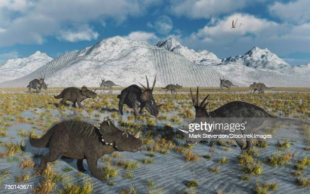 A mixed herd of Centrosaurus and Styracosaurus dinosaurs.