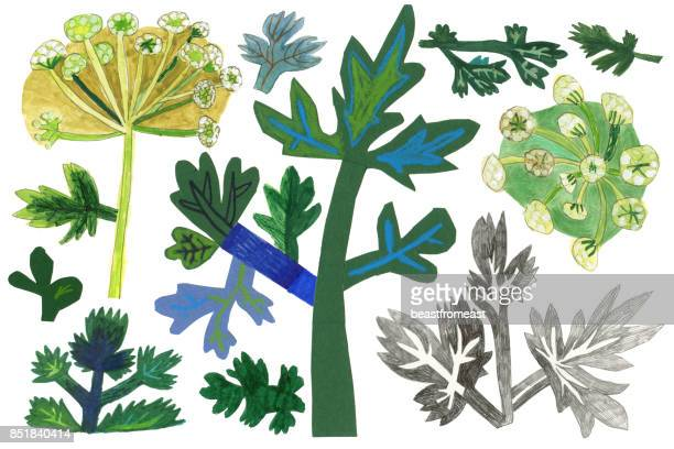 mixed media parsley herb set - mixed media stock illustrations