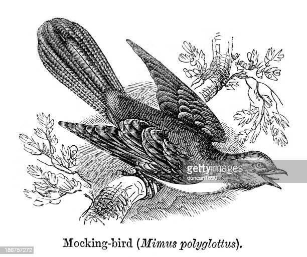 mocking bird - mockingbird stock illustrations, clip art, cartoons, & icons
