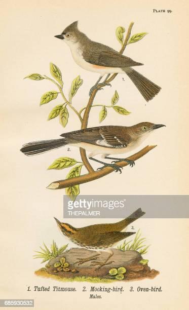 mocking bird lithograph 1890 - mockingbird stock illustrations, clip art, cartoons, & icons