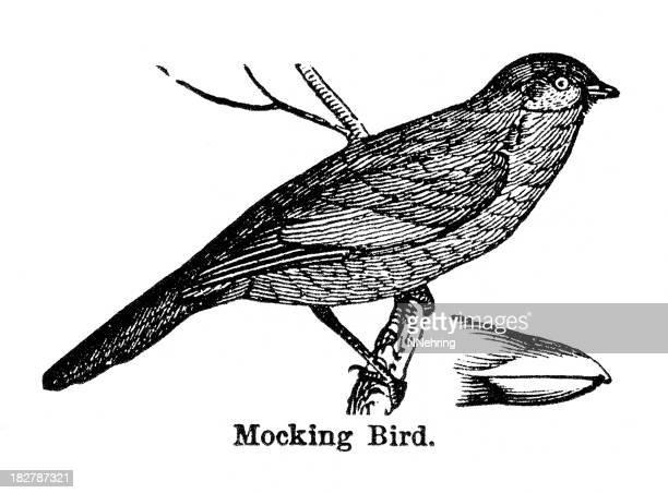 mockingbird engraving - mockingbird stock illustrations, clip art, cartoons, & icons