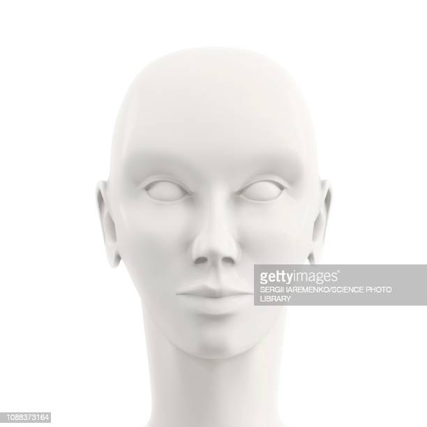 model of a human head, illustration - female likeness stock illustrations