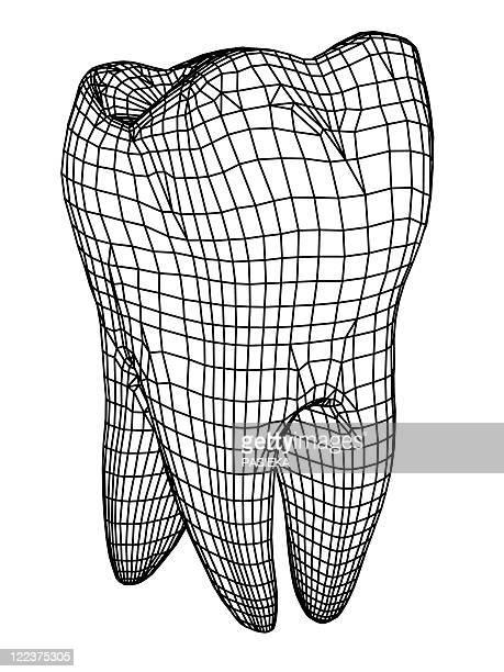 molar tooth - molar stock illustrations