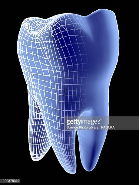 molar tooth - human teeth stock illustrations