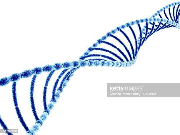 dna (deoxyribonucleic acid) molecule, computer artwork - genetic research stock illustrations