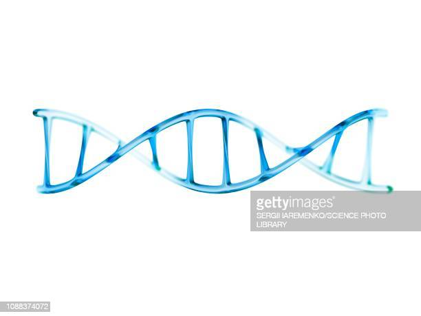 dna molecule, illustration - biochemistry stock illustrations