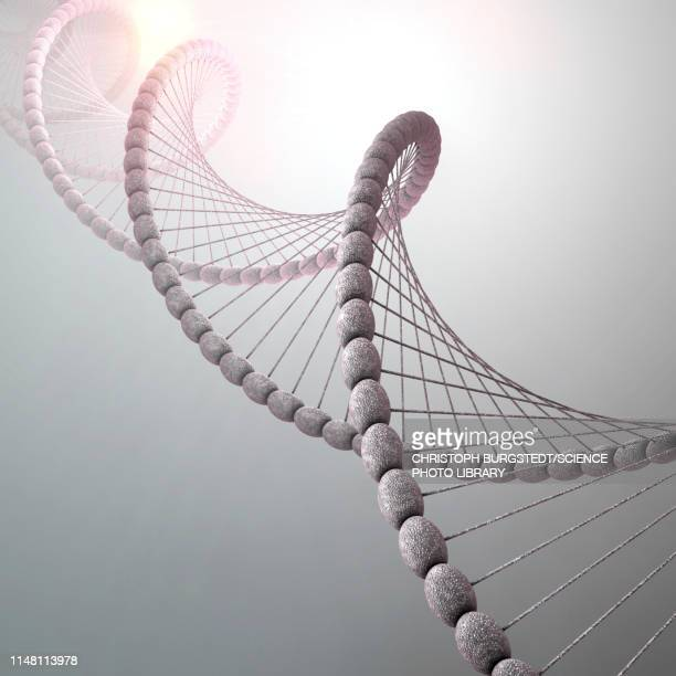 dna molecule, illustration - molekül stock-grafiken, -clipart, -cartoons und -symbole
