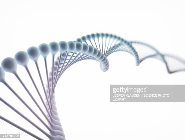 DNA molecule, illustration