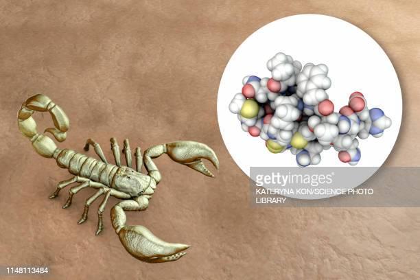 molecule of scorpion chlorotoxin, composite image - deathstalker stock illustrations