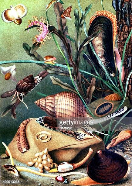 mollusks - group of animals stock illustrations, clip art, cartoons, & icons