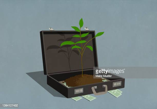 money and growing sapling inside business briefcase - opportunity stock illustrations