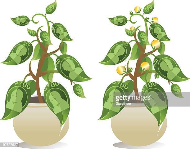 money tree - money tree stock illustrations, clip art, cartoons, & icons