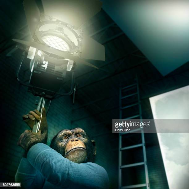 Monkey holding light in photography studio