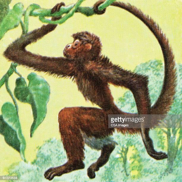 monkey - great ape stock illustrations