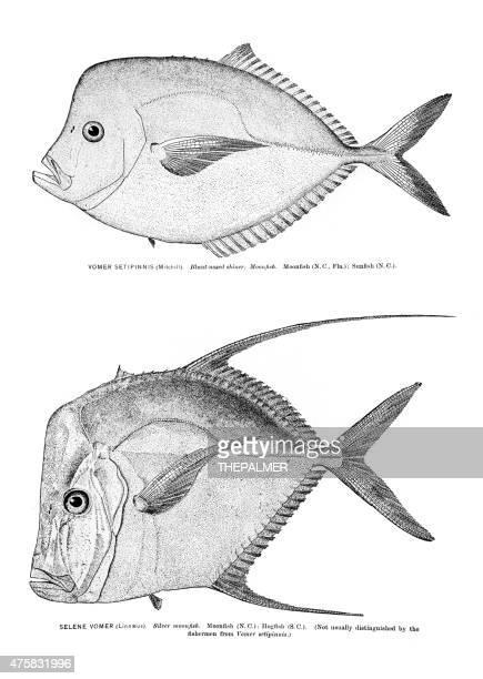 Moonfish grabado