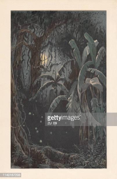 群がっホタルと熱帯の月明かりの夜, リトグラフ, 1898 - リトグラフ点のイラスト素材/クリップアート素材/マンガ素材/アイコン素材