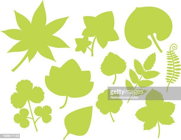 more green leaf shapes(iii). - marrom stock illustrations