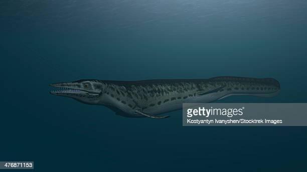 ilustraciones, imágenes clip art, dibujos animados e iconos de stock de mosasaur swimming in prehistoric waters. - paleobiología