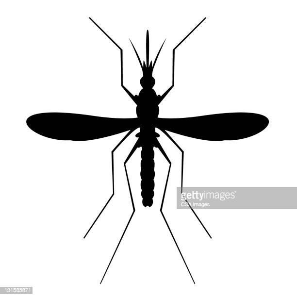 illustrations, cliparts, dessins animés et icônes de mosquito silhouette - moustique