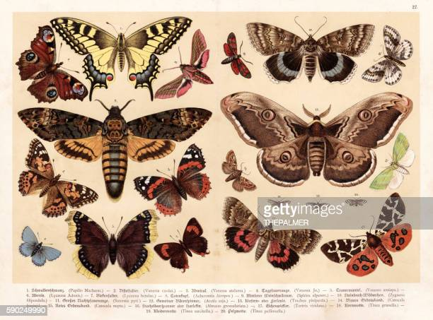 Moths and butterflies chromolithography 1888