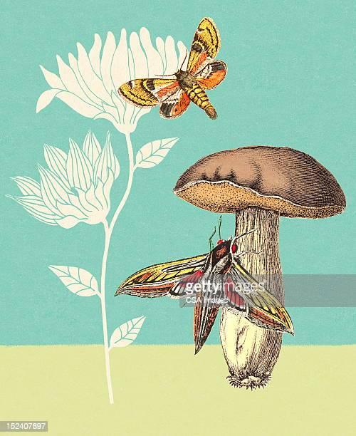 Moths, Mushroom and Flowers
