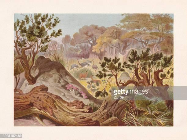ilustraciones, imágenes clip art, dibujos animados e iconos de stock de termitas de construcción de montículos en africa, cromolitografía, publicada en 1884 - biodiversidad