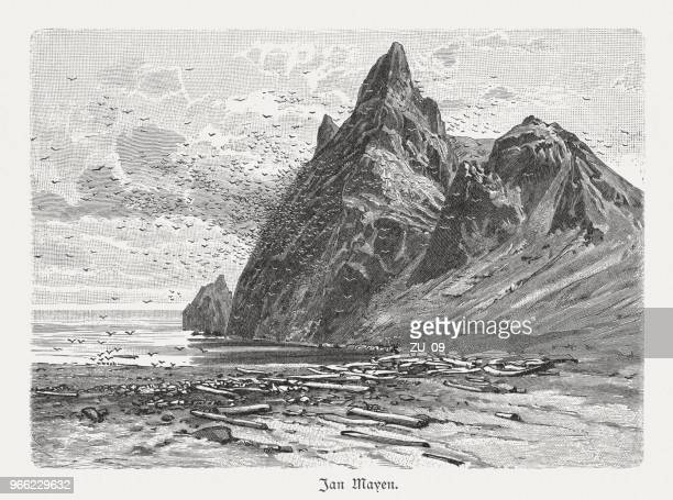 mountain with bird colony on jan mayen, woodcut, published 1897 - driftwood stock illustrations