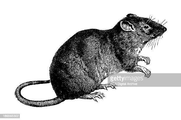 Del Mouse